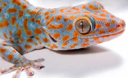 gekko mooi